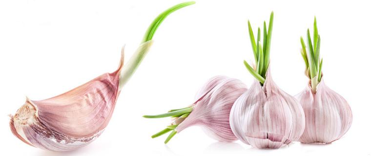 这种菜发了芽竟更抗癌 更有益心脏健康