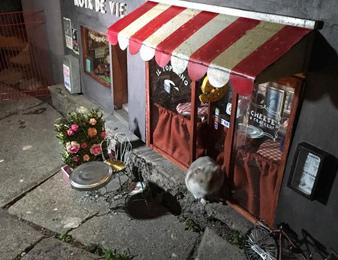 有人在瑞典街头给老鼠开了几家店铺